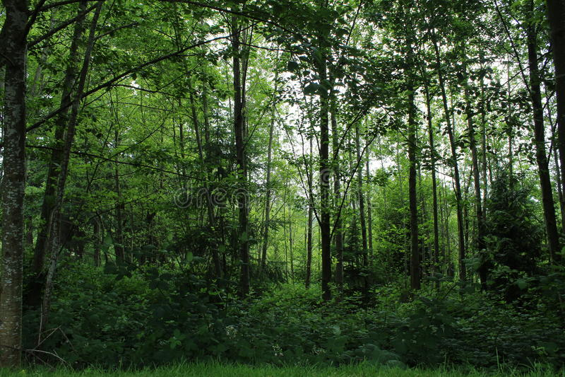 Djup frodig grön washington skog royaltyfria bilder