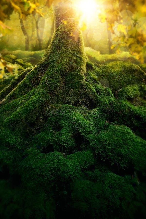 Djup magisk skog royaltyfri foto
