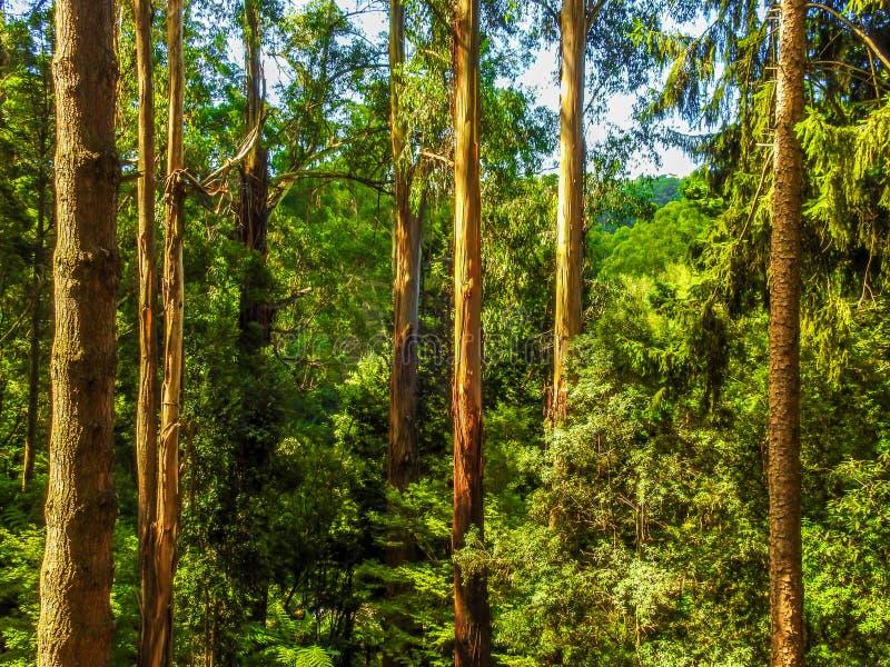 Djup skog i Alfred Nicholas trädgårdar 1 royaltyfri bild