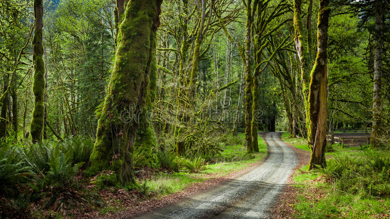 Djup skog i den Elwha flodslingan, olympisk nationalpark arkivbild