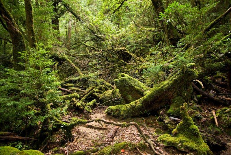 djup skogbana royaltyfria bilder