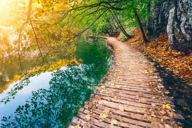 Djup skogström med kristallklart vatten med träpahway Plitvice lakes royaltyfria foton