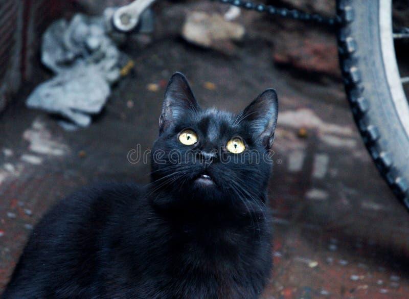 Djup svart katt i Marocko arkivbilder