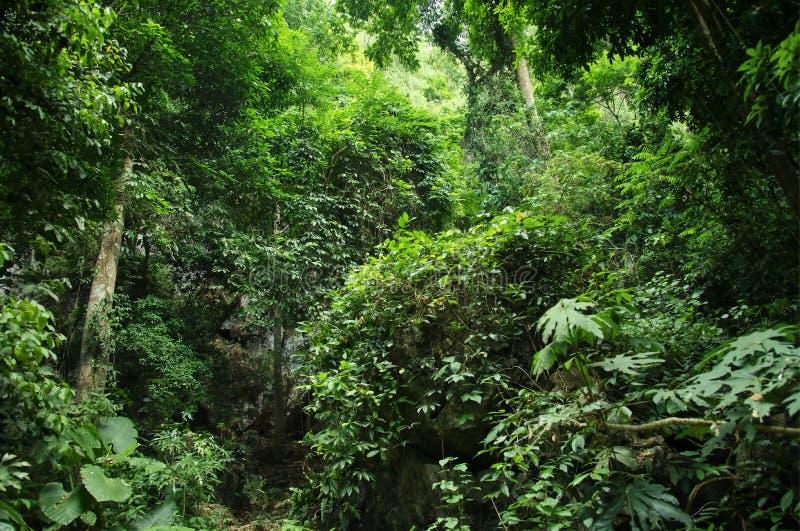 Djup tropisk djungelbakgrund: Thailand royaltyfri bild