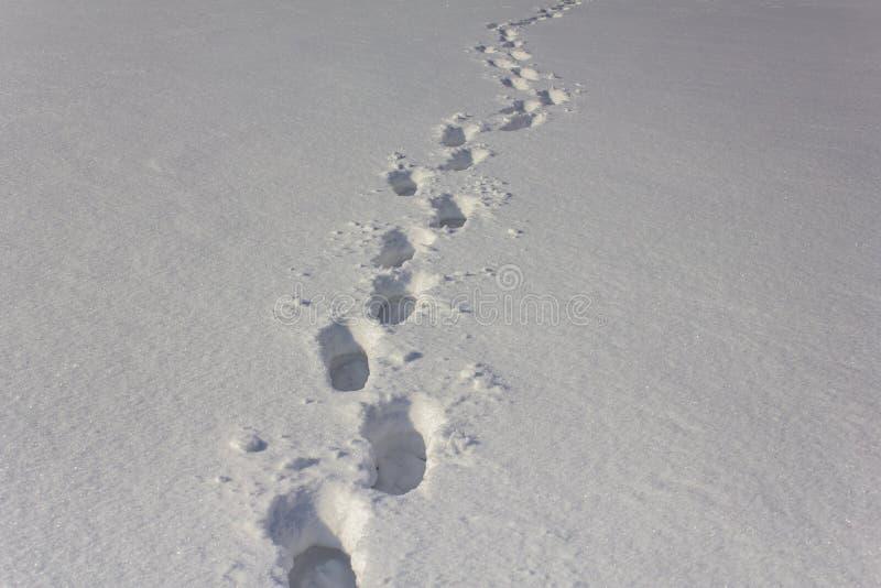 Djupa fotspår av en man i vit snö royaltyfria bilder