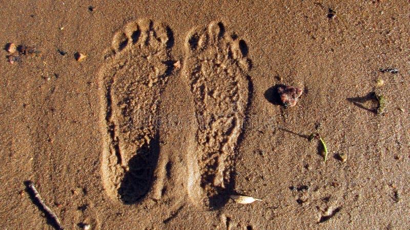 Djupa fotspår i den våta sanden från kal mänsklig fot bland pinnar, stenar och stupade gula små sidor från träden royaltyfria bilder