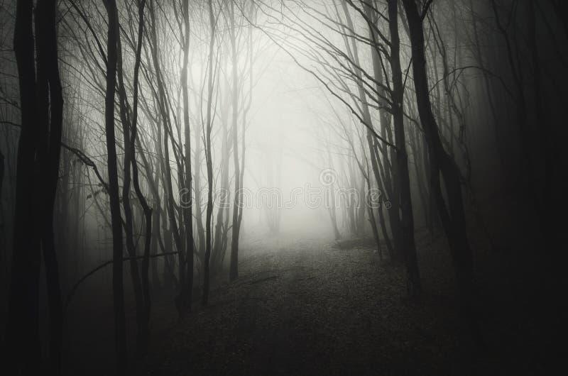 Djupa mörka trän med mystisk dimma på natten royaltyfri fotografi