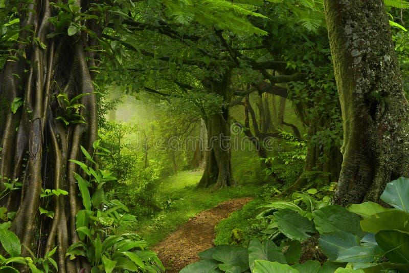 Djupa tropiska djungler royaltyfria foton