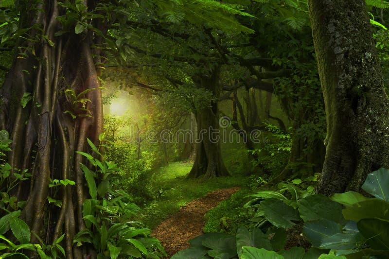 Djupa tropiska djungler fotografering för bildbyråer