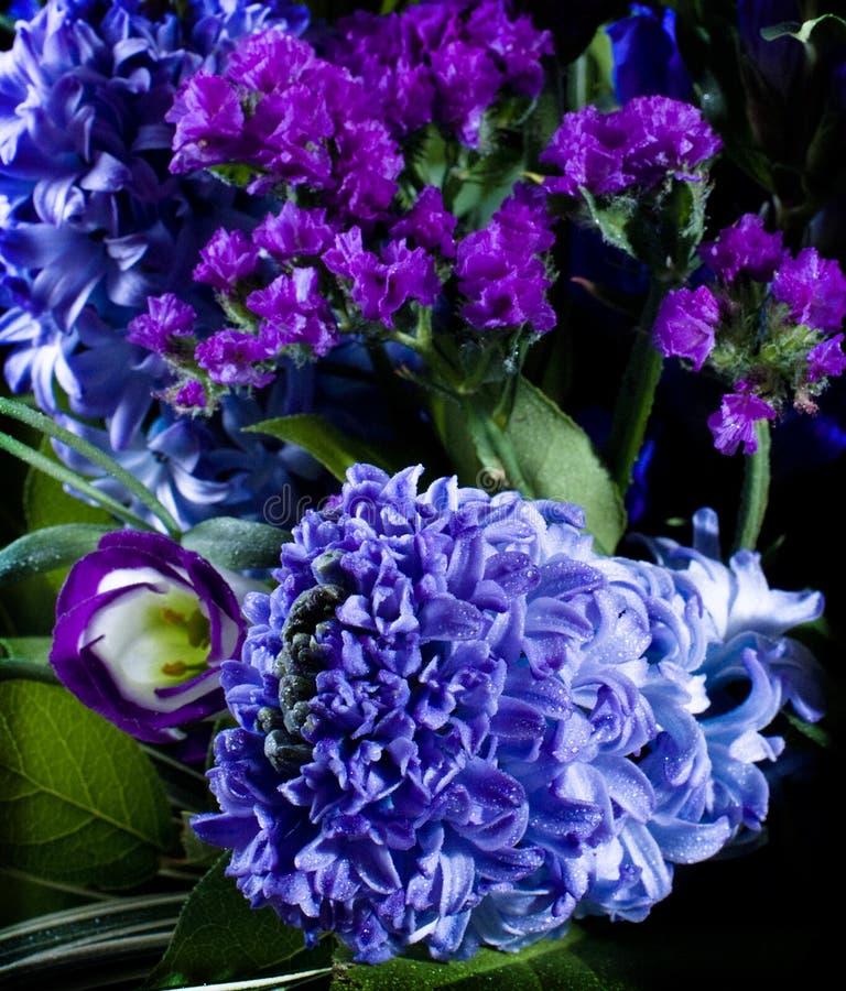 djupa violetta hyacinthusorientalis royaltyfri foto