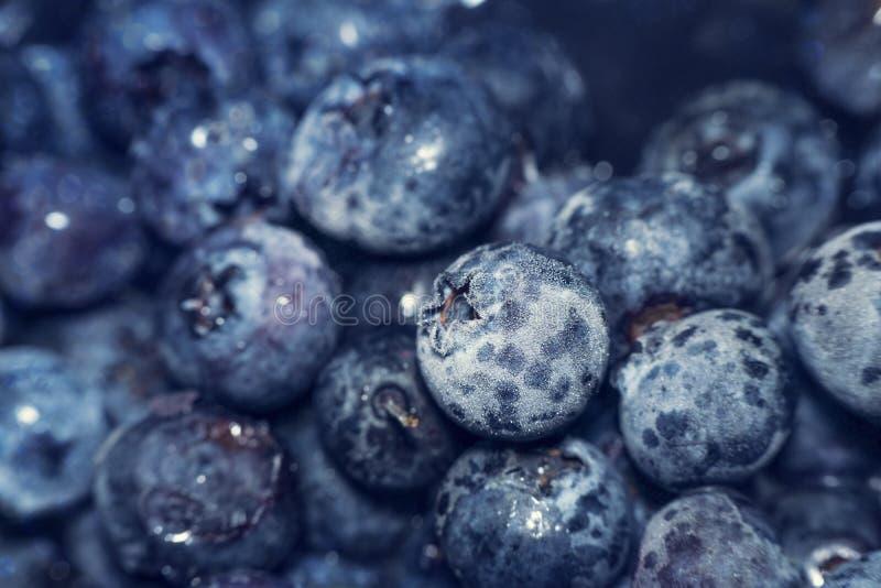 Djupfryst blått blåbär också som är bekant som högväxt, träsk eller hög bluebe royaltyfria foton