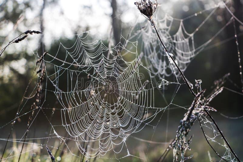 Djupfryst Cobweb fotografering för bildbyråer