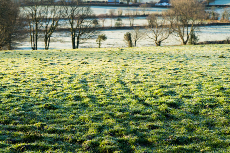 Djupfryst Dartmoor fält arkivbilder