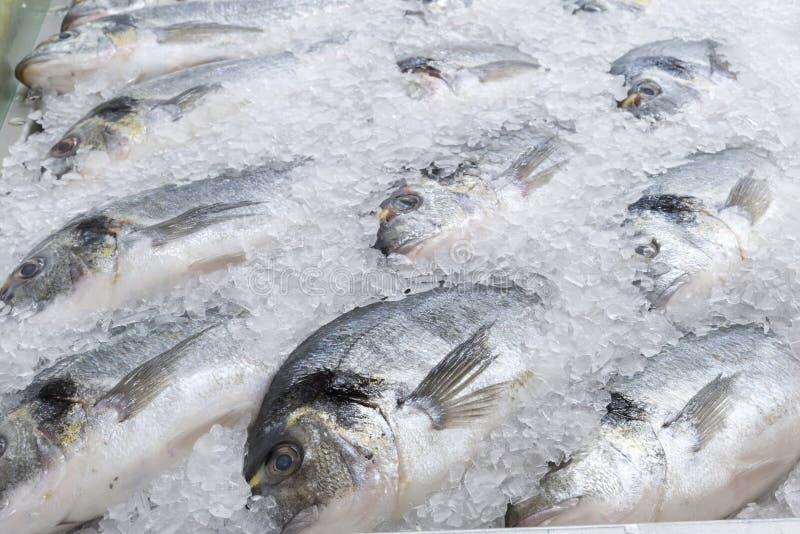 Djupfryst fisk för havsbraxen royaltyfria bilder