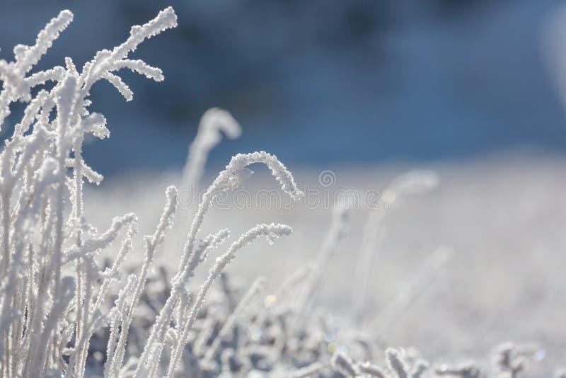 djupfryst gräs royaltyfri foto