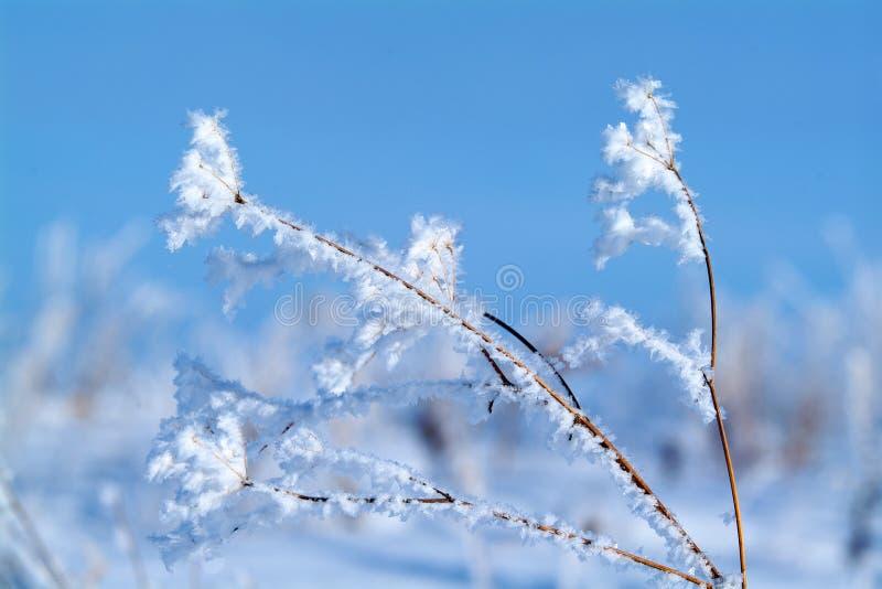 Djupfryst gräs i vintermorgonen i berg royaltyfria foton