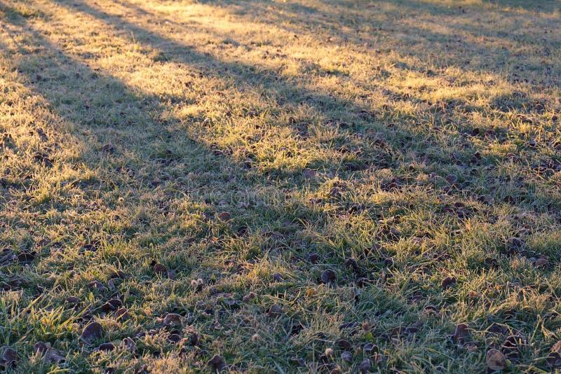 Djupfryst gräs och sidor av träd i morgonsolen Frostig solig morgon royaltyfria foton