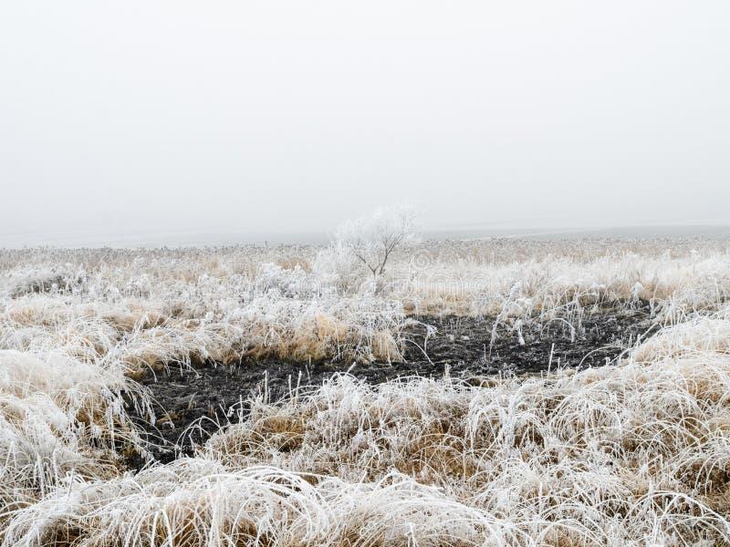 Djupfryst gräs och träd i vinter arkivbilder