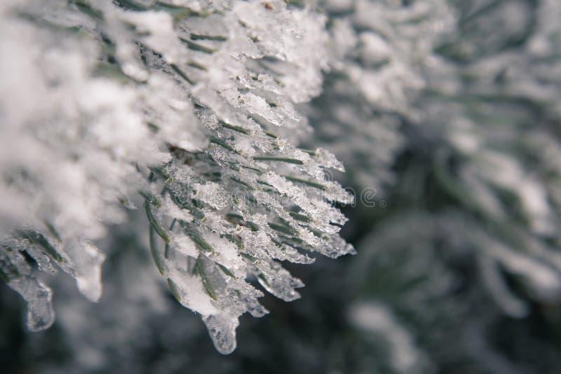 Djupfryst julträd och suddig snö fotografering för bildbyråer