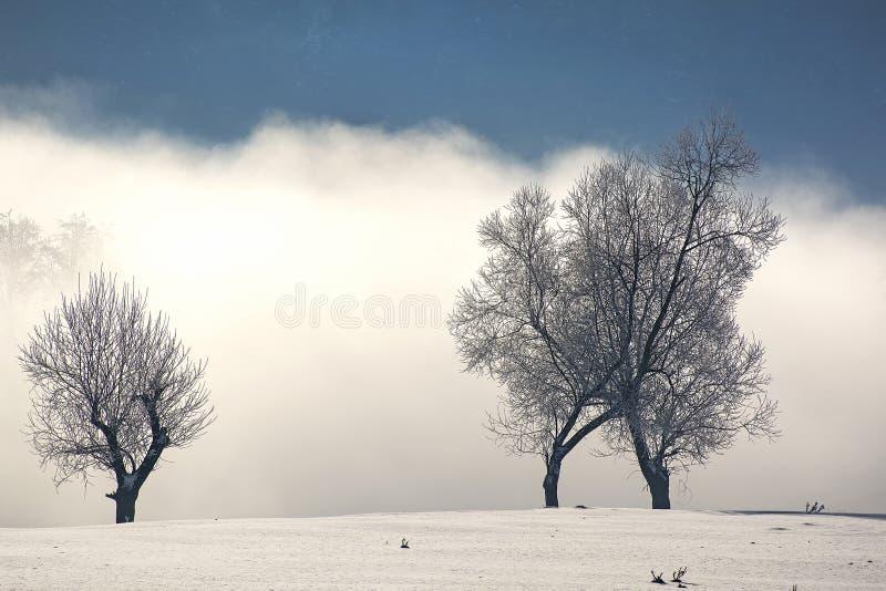 Djupfryst landskap i vinter royaltyfri foto