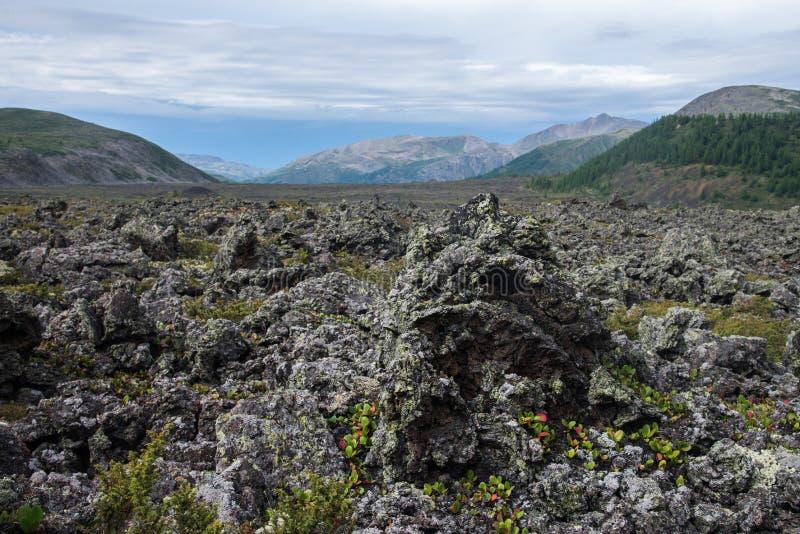 Djupfryst lavafält i vulkandalen med gamla Vulcan på bakgrund Sceniskt landskap, Ryssland, Sibirien royaltyfri foto