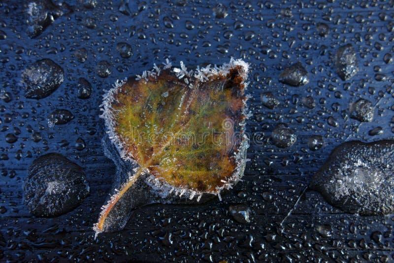 Download Djupfryst leaf fotografering för bildbyråer. Bild av skog - 27284211