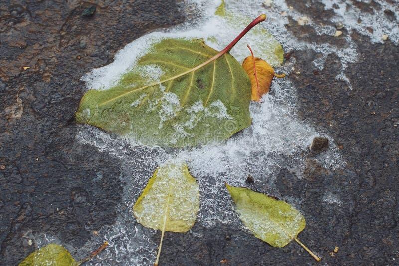 djupfryst leaves arkivbilder