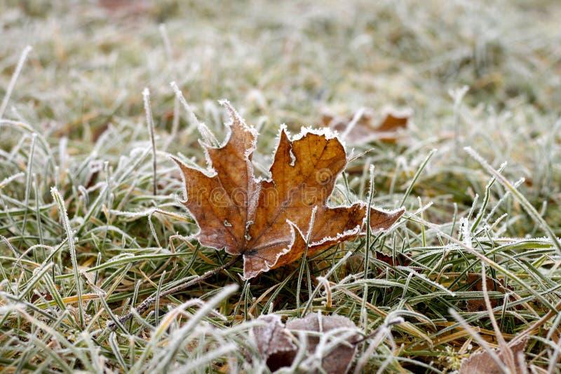 djupfryst leaves royaltyfri bild