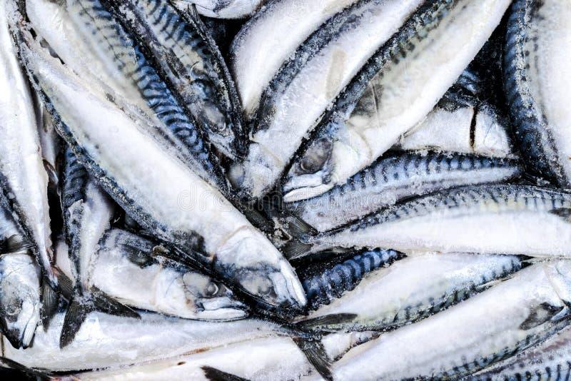 Djupfryst makrill Djupfryst grupp av fisken med is atlantisk fisk mackerel Makrillmodell Makrilltextur royaltyfria bilder