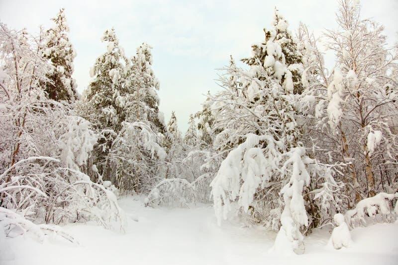djupfryst norr snowträn fotografering för bildbyråer