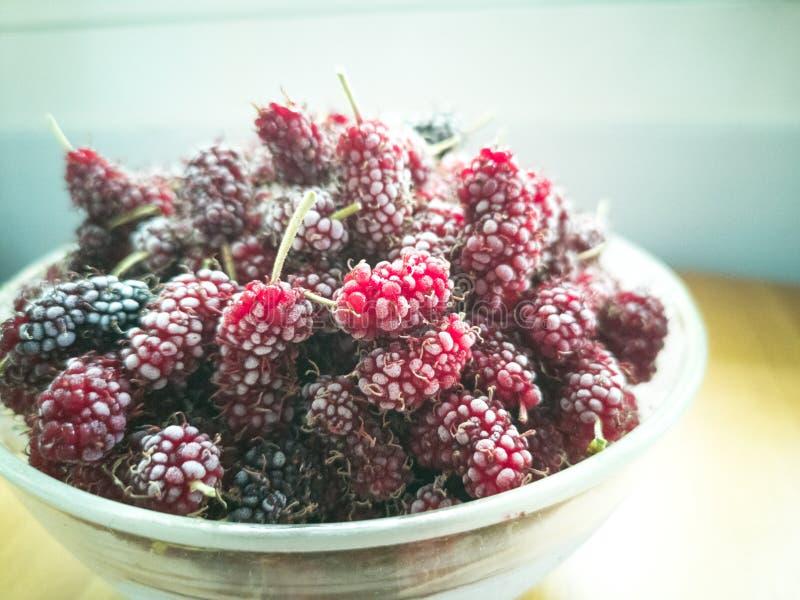 Djupfryst organisk mullbärsträd, bär, closeup—bild royaltyfri foto