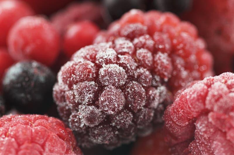 Djupfryst söt frukt royaltyfri bild