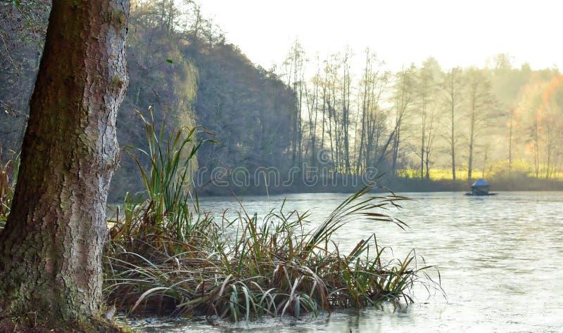 Djupfryst sjö i den Hessen Tyskland i den sena nedgången royaltyfri fotografi