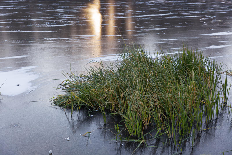 Djupfryst sjö i vinter och gräset arkivbild