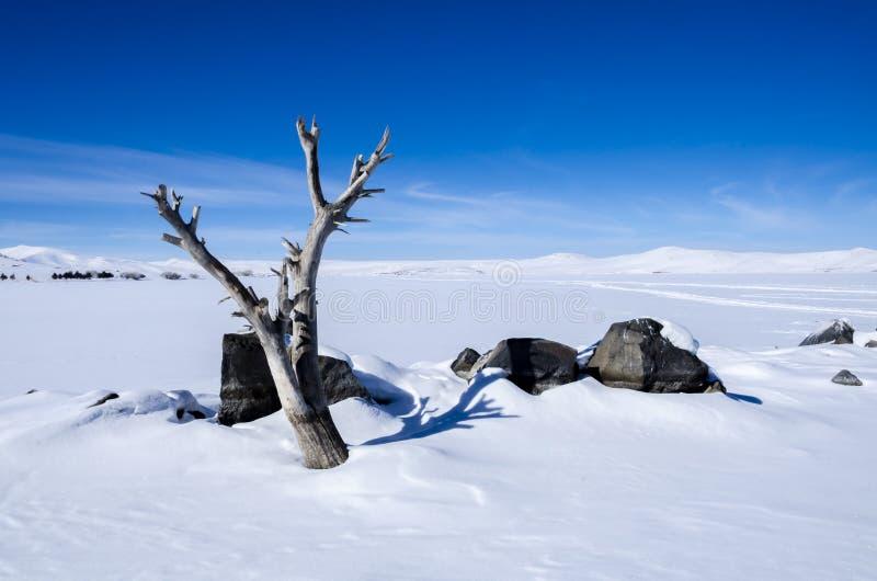 Djupfryst sjö och träd arkivfoto
