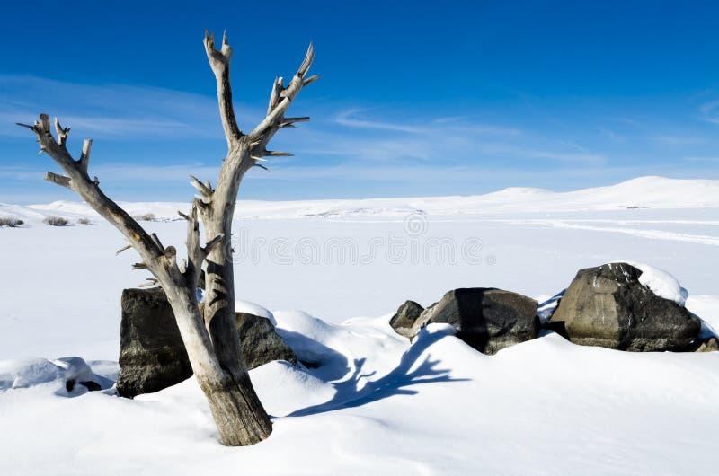 Djupfryst sjö och träd royaltyfri bild
