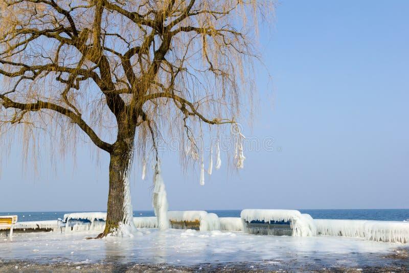 Djupfryst sjösida i en sträng vinter arkivfoton