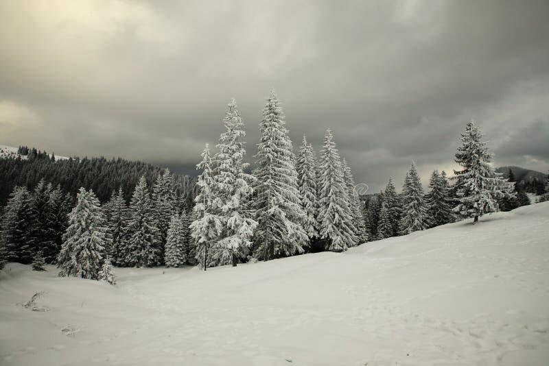 Djupfryst skog royaltyfri fotografi