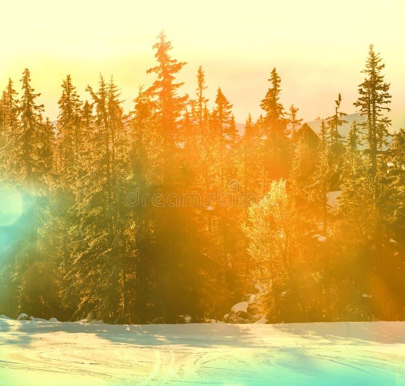 Djupfryst skog royaltyfria bilder