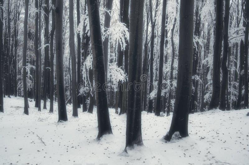Djupfryst skog i drömlik vinterfantasi arkivfoton