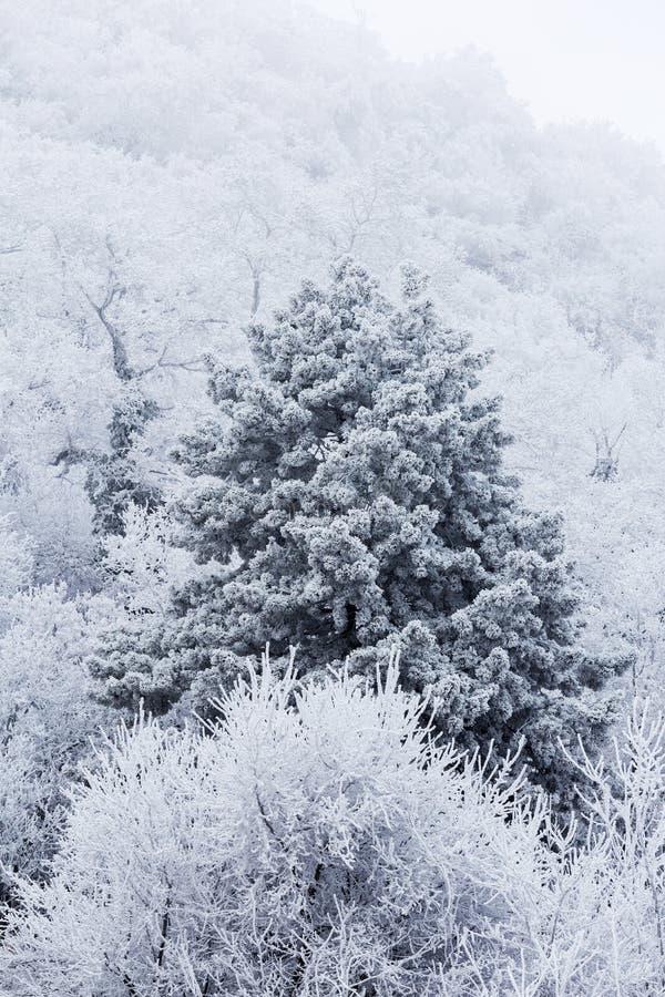 Djupfryst skog på en molnig kall dag arkivfoton
