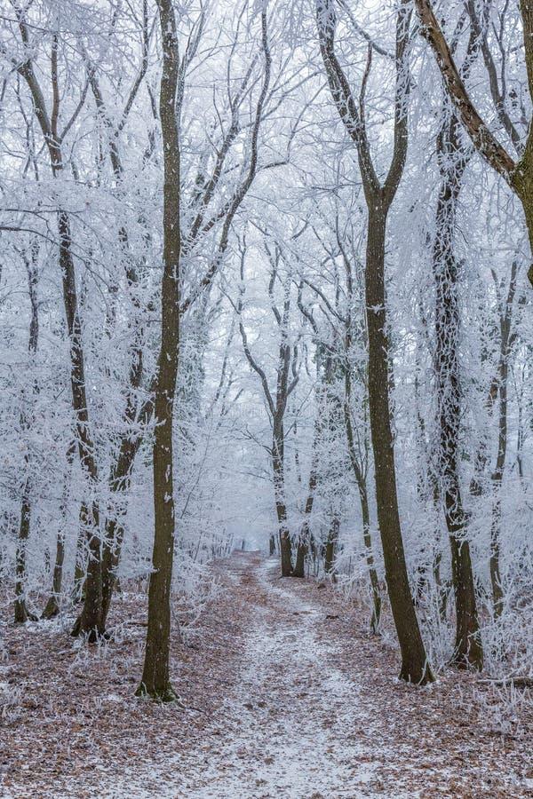 Djupfryst skog på en molnig kall dag arkivbilder