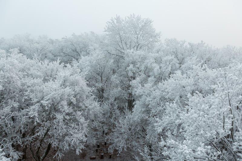 Djupfryst skog på en molnig kall dag arkivbild