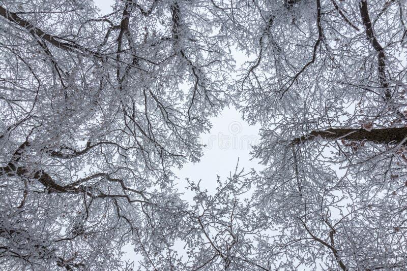 Djupfryst skog på en molnig kall dag royaltyfri bild