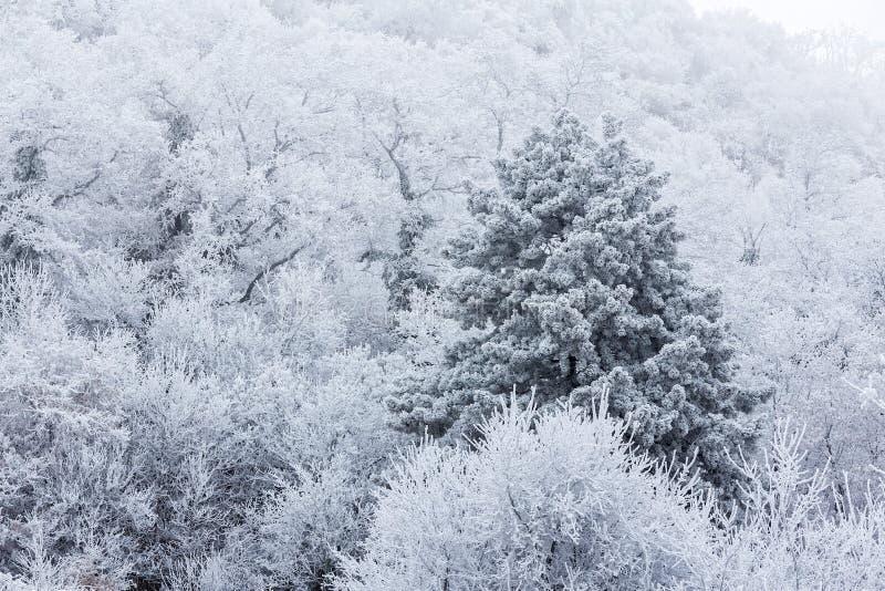 Djupfryst skog på en molnig kall dag i Ungern arkivfoto
