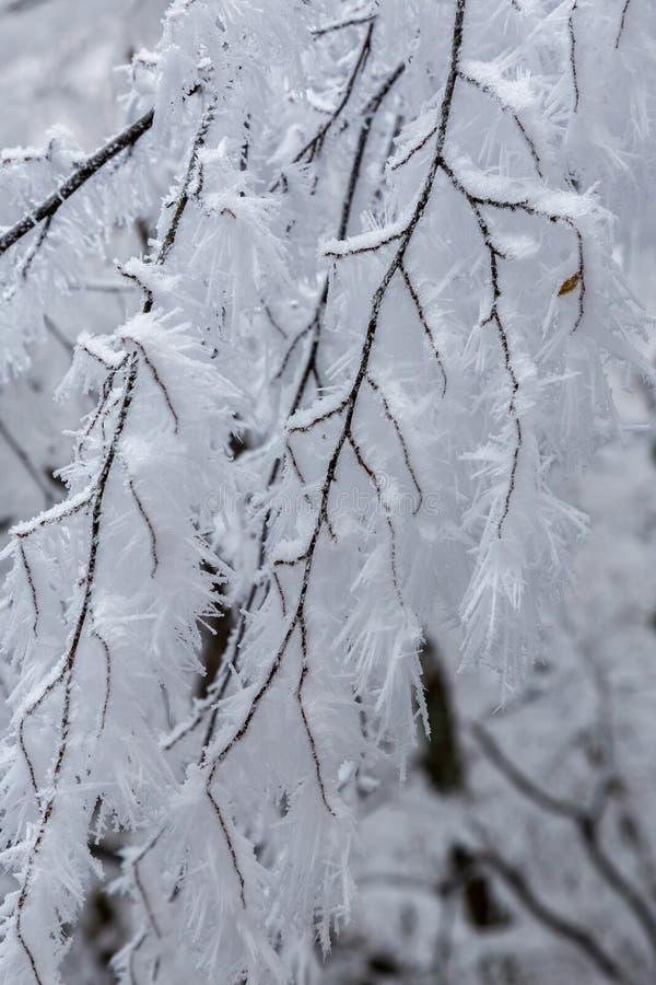 Djupfryst skog på en molnig kall dag i Ungern royaltyfria foton