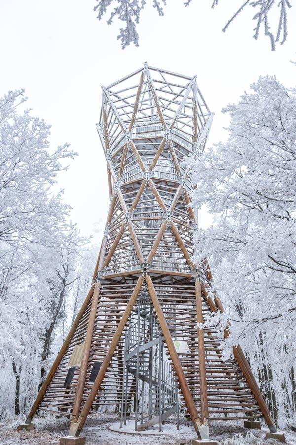 Djupfryst skog på en molnig kall dag i Ungern, berg Badacso royaltyfri foto