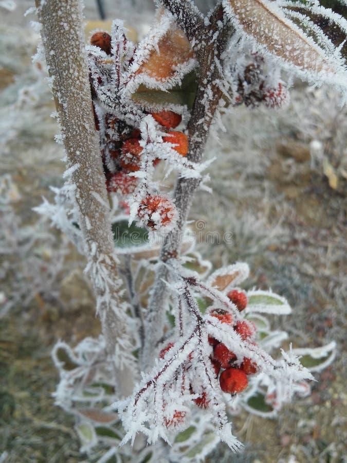 Djupfryst steg under vinterdagar arkivfoton