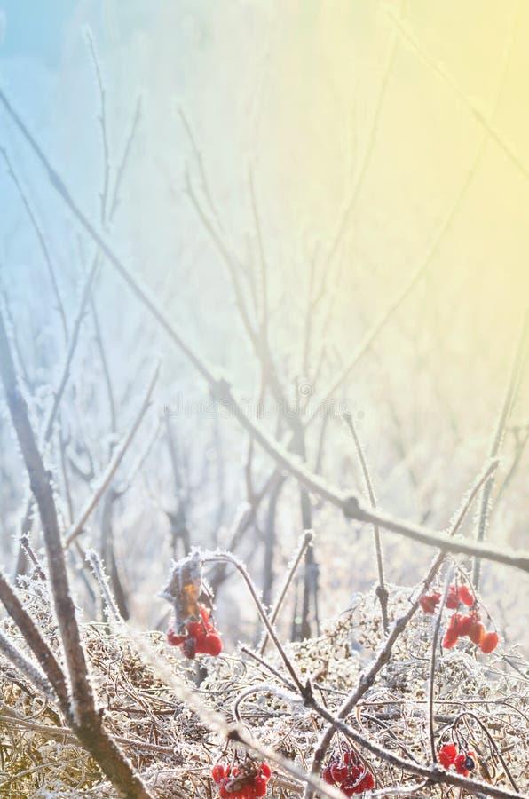 Djupfryst is täckt blomma lätt bakgrund redigerar bildnaturen till vektorvintern arkivfoton