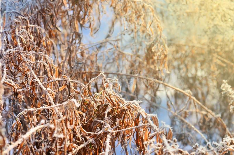 Djupfryst is täckt blomma lätt bakgrund redigerar bildnaturen till vektorvintern royaltyfria bilder